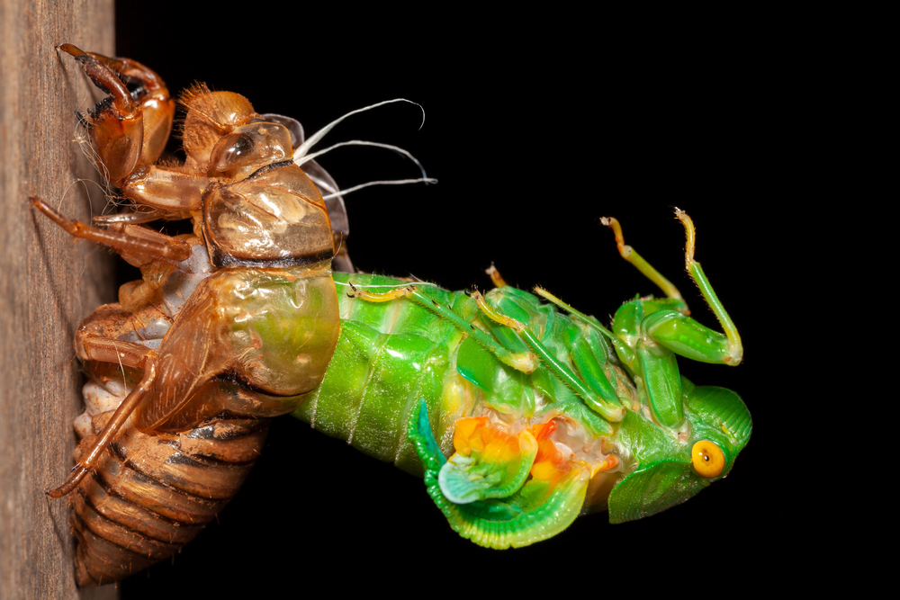 molting bugs